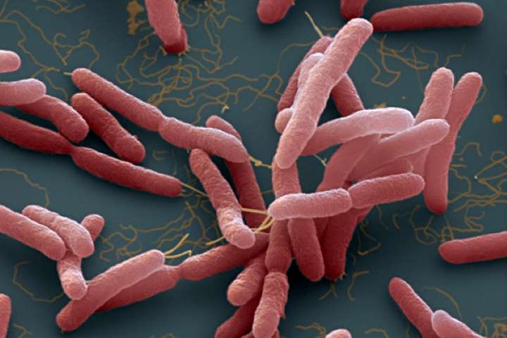 Tacozin® thường sử dụng để điều trị nhiễm trùng do một số vi khuẩn gây ra